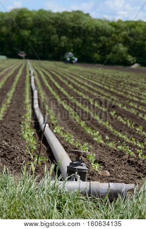 Irrigation system in agriculture - water pipes on a farm field