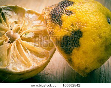 Closeup old rotten piece of lemon. Bad unhealthy food