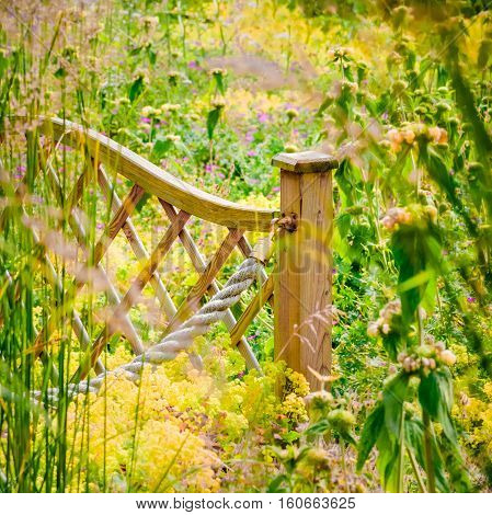 Widlflower garden fence rural outdoor countryside sunny blooming colourful plants in the summer UK England