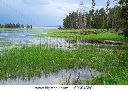 Beautiful Wetland area of Yellowstone National Park