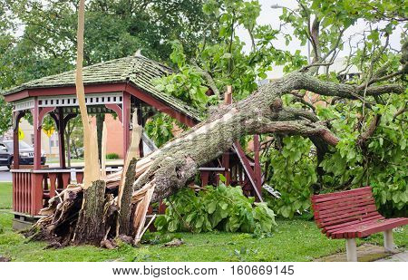 Tree Fallen On A Gazebo