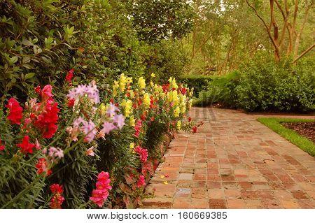 brick walkway with wall of flowers in Louisiana