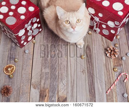 Holiday Orange Cat