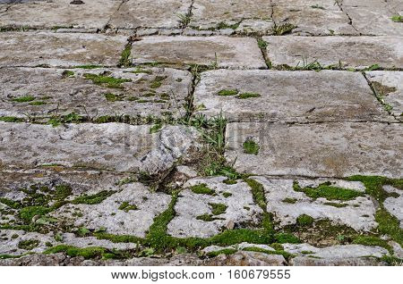 Texture of the road from the old concrete slabs mossy