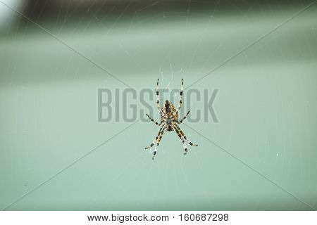 Large orb weaver spider on web in home outdoor setting.