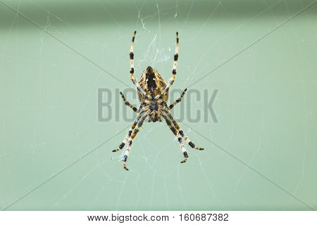 Orb weaver spider in middle of web.