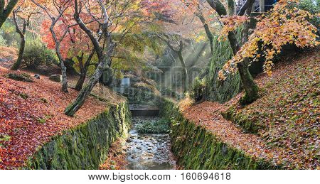 Beautiful morning misty autumn color leaves with sun rays in Tofukuji temple Kyoto Japan