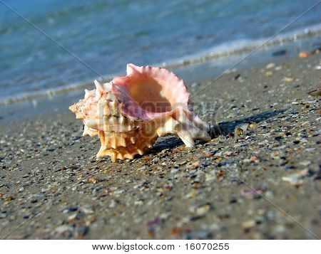 Sea shell on the coast