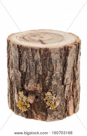 cut tree stump isolated on white background