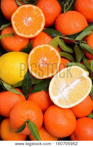 Fresh tangerine clementine and lemons with leaves, top view, vertical.