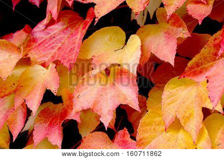 close up on leaves in autumn colors