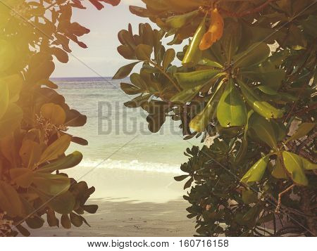 Tropical Seychelles. Palm trees on the island of La Digue