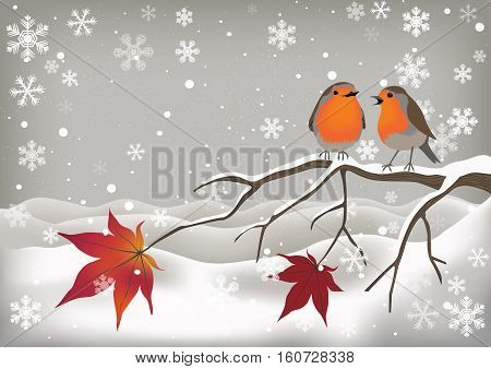 Cute pair of robin red breasts chirping on a tree branch in a snowy scene with snowflakes.