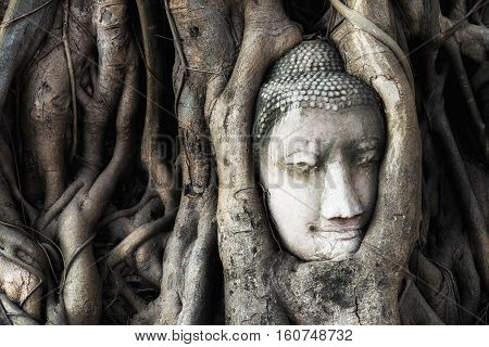 Head of Buddha statue in the tree roots at Wat Mahathat temple in Ayutthaya Historical Park at Ayutthaya Thailand.
