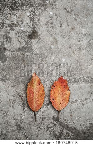 Rustic concrete background with vintage dry leaf.