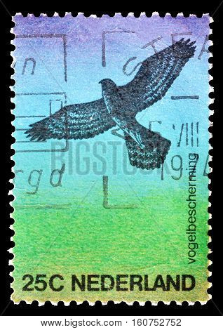 NETHERLANDS - CIRCA 1974 : Cancelled postage stamp printed by Netherlands, that shows Hawk.