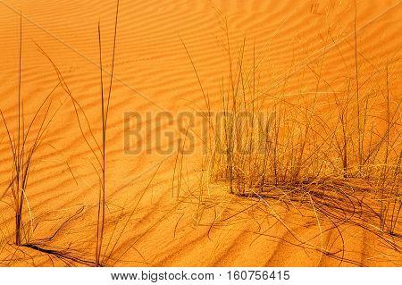 Close-up On Dry Shrubs In The Desert