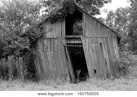 Close-up black & white image of leaning abandoned wood shed in wooded area.