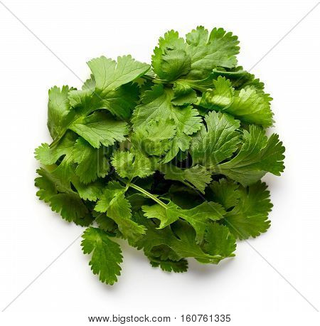 Coriander Leaves Isolated On White, From Above