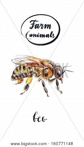 Bee with honey on paw hand drawn - watercolor Illustration