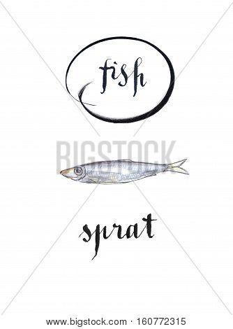Sprat fish hand drawn - watercolor Illustration