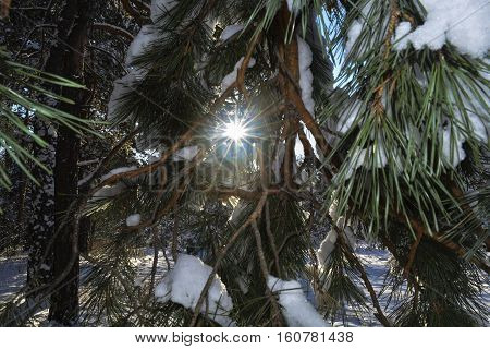 the sun breaks through the branches sheltered snow