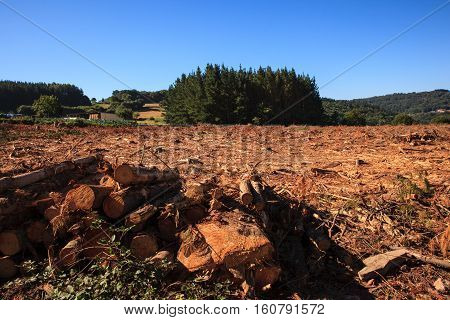 View of the deforestation in the spanish forest