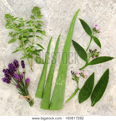 Fresh herbs for skin care with marjoram, lavender, aloe vera and comfrey leaf and flower sprigs.