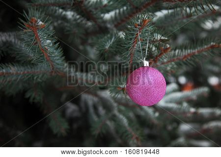 Christmas Balls on the branch of  tree outdoor