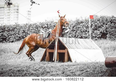 Cross country rider crashing out, dangerous sport, the rider falls off the horse, the disobedience, abrupt stop in front of hard obstacle, duotone art