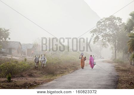 Two Indian women go with purchases along the rural asphalted road by two grazed cows. In the distance are seen in a haze rural houses and a steep of the mountain. India Bihar on January 30 2014.