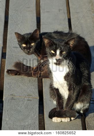 Black cats are beggars on the dock tails whiskers ears