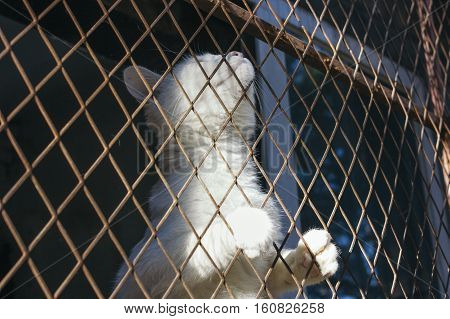 White cat trap and is stuck in a steel wire netting,cage,hoping for freedom with sad feeling