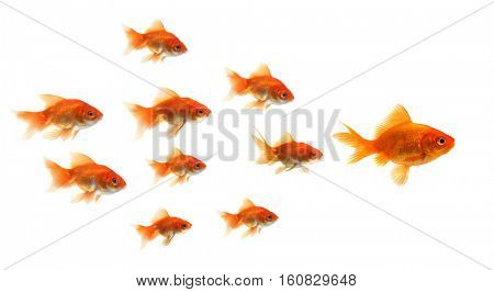 goldfish standing out of the crowd