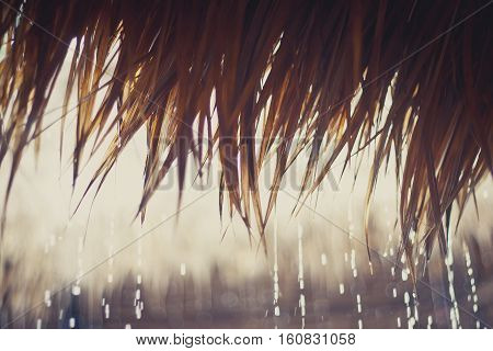 Tropical rain drops on a reed roof.