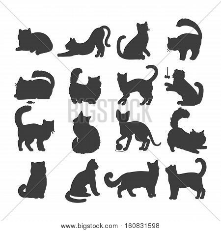 Different breed cats. European shorthair, exotic, bengal, somali, maine coon cats heads flat vector illustrations set isolated on white background. For pet shop ad, animalistic hobby concepts