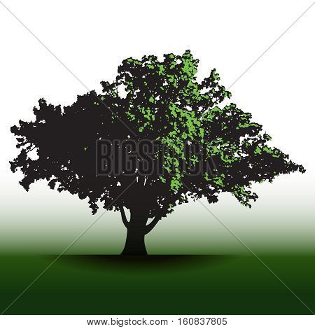 A large glorious old oak tree for print or web