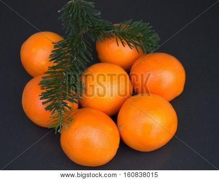 Christmas composition Spruce branches oranges Spruce branches Oranges on a dark background oranges Spruce branches