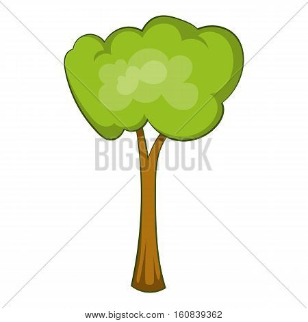 Park tree icon. Cartoon illustration of park tree vector icon for web
