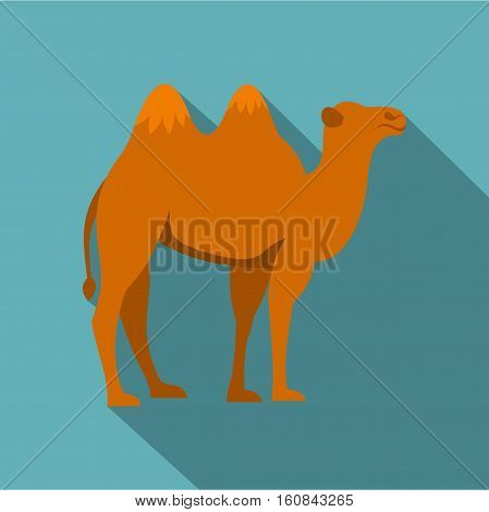 Camel icon. Flat illustration of camel vector icon for web