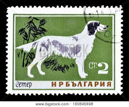 BULGARIA - CIRCA 1964 : Cancelled stamp printed by Bulgaria, that shows Seter.