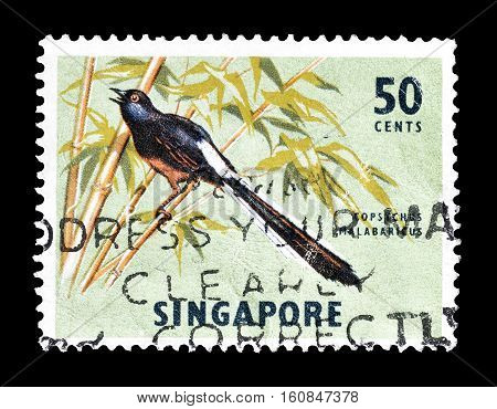 SINGAPORE - CIRCA 1963 : Cancelled stamp printed by Singapore, that shows Shama bird.