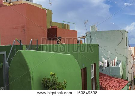 Picturesque old quarter of Tazacorte la Palma with funny dog on the balcony of the green hous