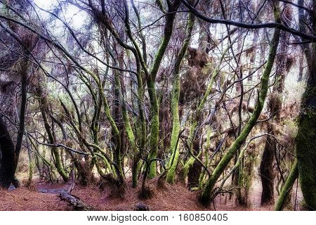 Mossy forest of el Pilar the entrance of the