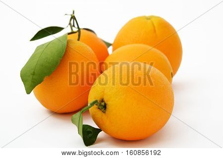 The best and highest quality high-resolution bigstock orange paintings for advertising agencies and design companies
