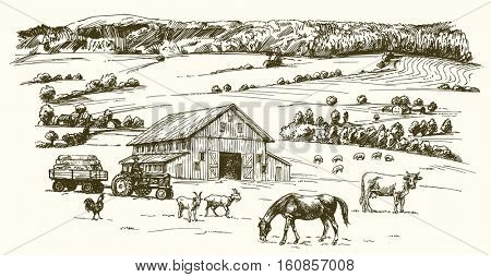 Farm animals grazing on meadow. Farm on the background. Hand drawn illustration.