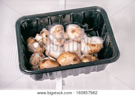 Rotten mushrooms covered with mold in fridge