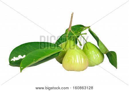 Rose apple Isolated on White background, Fruit