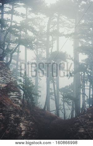 Foggy Coniferous Forest Landscape misty trees background Travel serene scenic view