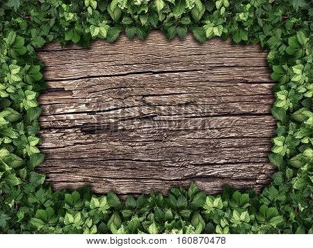 the climbing plant on a wooden background